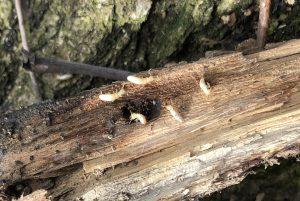 Termites 2